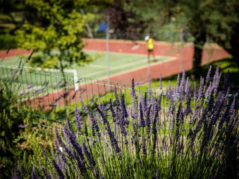 Lavendel in der Nähe von Minigolf und Tennisplatz