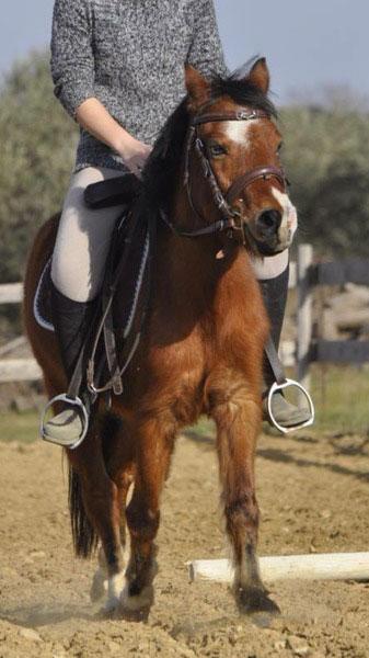Pony Nesquik