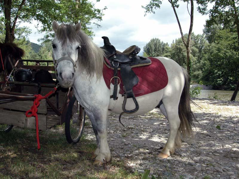calèche et poney