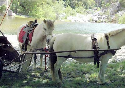 Pony and carriage riding