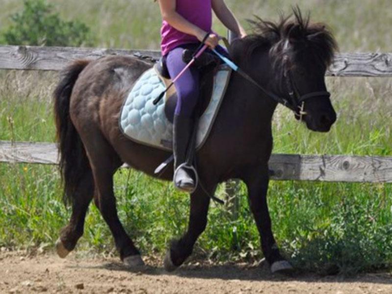 Pony Zippy